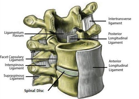 Chiropractic Minneapolis MN Ligament Damage in the Neck